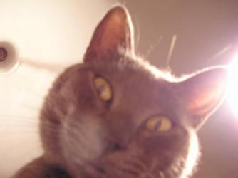 antonio cat by nx74