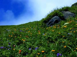 Emergent Spring by Eliasome