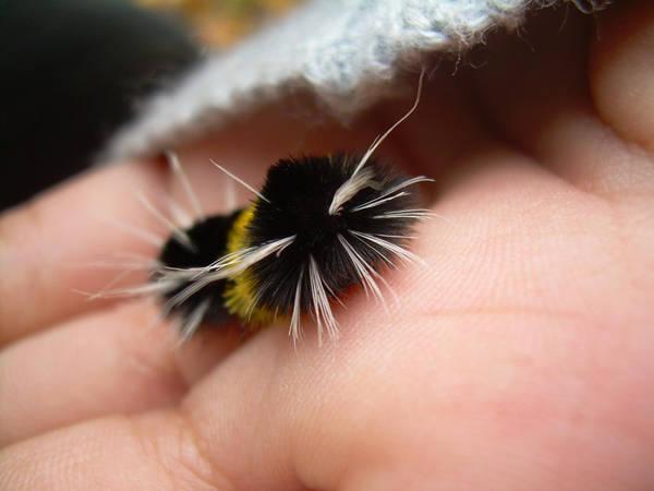 Caterpillar 1 by sabby64
