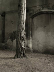 WoodStoneEarth by Pierre-Lagarde