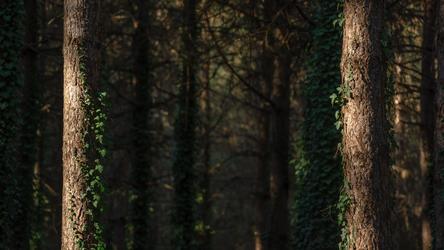 Deep Forest Light Wallpaper 1 : The Door by Pierre-Lagarde