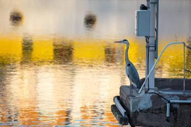 Urban Bird by Pierre-Lagarde