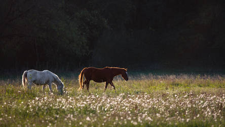 Horses at the Sunset Wallpaper by Pierre-Lagarde
