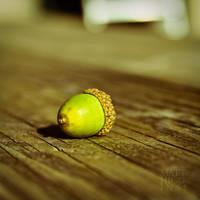 Baby Oak by Roscoe13mmh