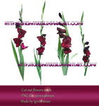 Beautiful Gladiolus Stock Flowers preview by IgnisFatuusII