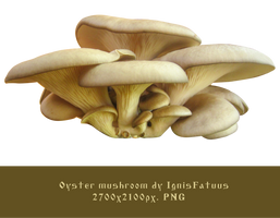 Oyster mushroom stock-by IgnisFatuus by IgnisFatuusII