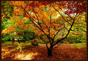 Autumn Mosaic by parallel-pam