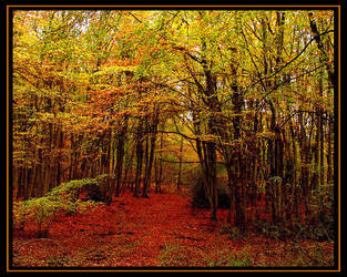 Autumn Beech Woodland by parallel-pam