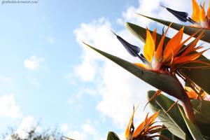 Flower by glenthekim