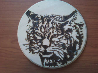 Pyrography - Bobcat by naaxha