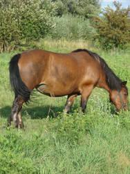 Summer horse by Cyklopi