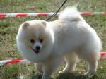Look how fluffy I am! by Cyklopi