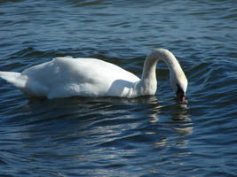 What you are looking for, Mr. Swan? by Cyklopi