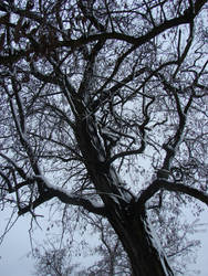 Snow covered tree by Cyklopi