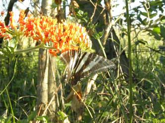 orange flowers and butterfly stripes by BabyWinkz