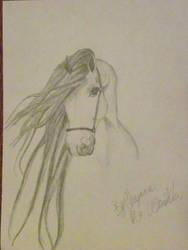 horse by BabyWinkz