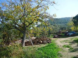 From Armutlu peninsula route 18 by tolosati