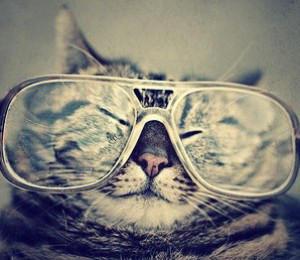CatSadowski's Profile Picture