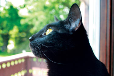 Black Cat Profile by DaggerTribal