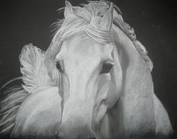 Horse by Tandi1993