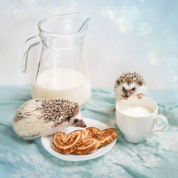Hedgehogs and breakfast by Black-Bl00d