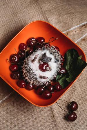Baby hedgehog by Black-Bl00d