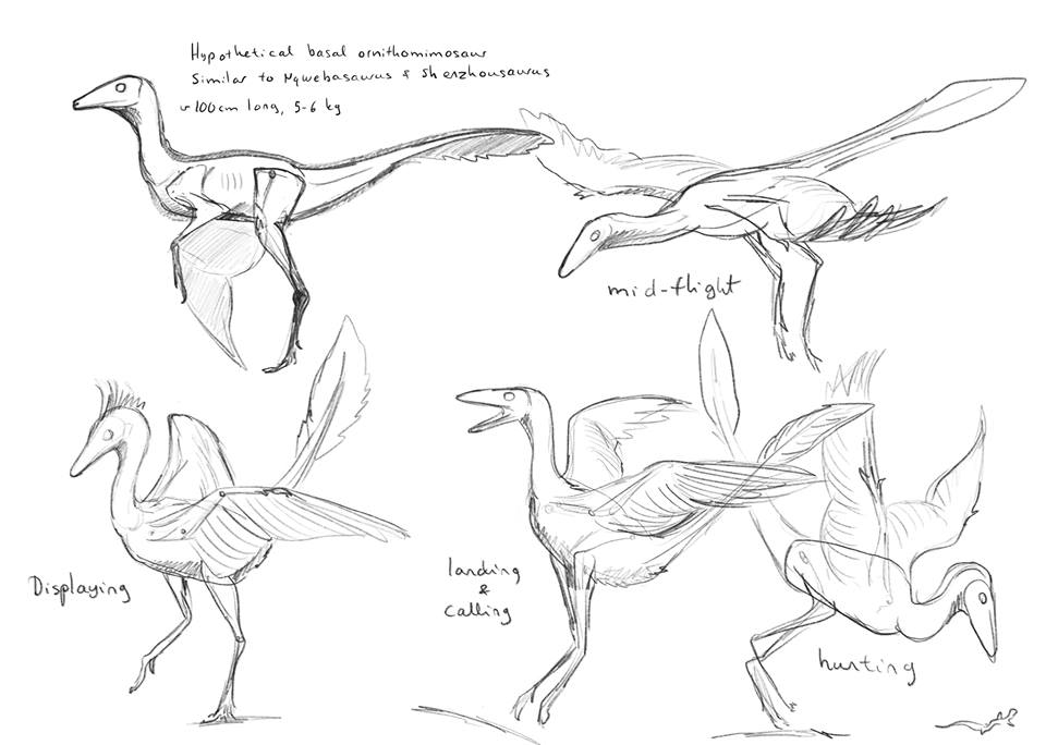 Flying ornithomimosaur sketches commission by Inmyarmsinmyarms