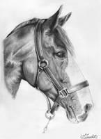 Portrait of horse by MilicaClk