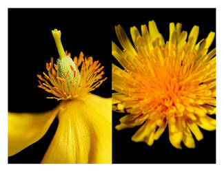 Yellow by macurti