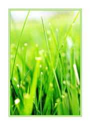 The Grass is Greener by macurti