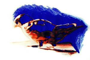 oiseau by JaspersAutumn