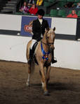 EA Warmblood 1 by CrowsNestPhotography
