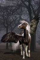 Dark Pegasus by CrowsNestPhotography