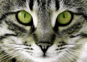 green cat 2 by fetteho