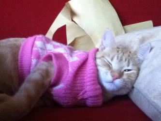 kitten in sweater by GILDAxx12