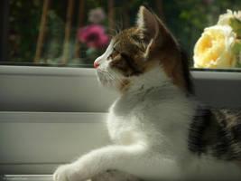 WindowLicker by NoisyTart