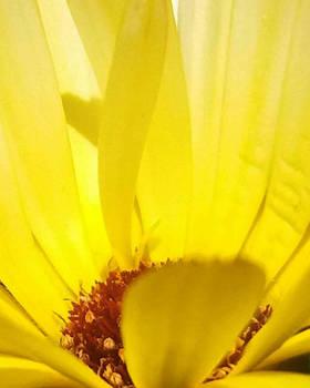 inside a flower  by artofexpo