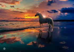 Sunset by artofexpo