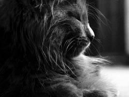 black:Kitten by radioharvest
