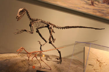 Deinonychus at the Chicago field museum by Melusine-Designs