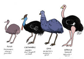 Giant Bird Club - Character Designs by orinocou