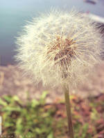 make a wish by birazhayalci