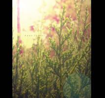 summer time by birazhayalci