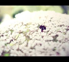 small things by birazhayalci