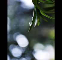 summer rain by birazhayalci