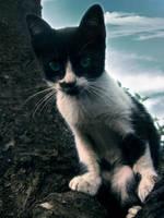 Meow by inumanu