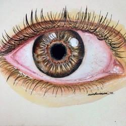 Brown Eye by erindwiazmi