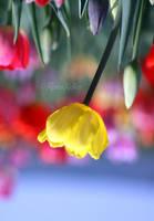 spring's turning my head by Rona-Keller