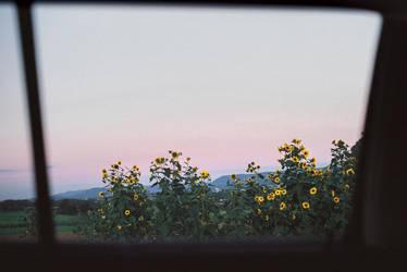 fleeting moments by Rona-Keller