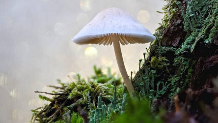 Mushroom /6 by andabata